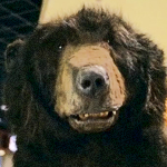 SDR_Boston-Bear-Hockey-Rules-tb