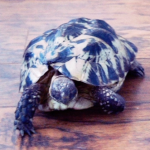 SDR_Gerry-la-tortue-tb-4